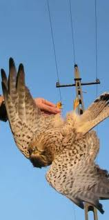 RETA Bird Kill photo