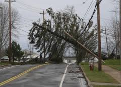 RETA tree fallen onto power line image